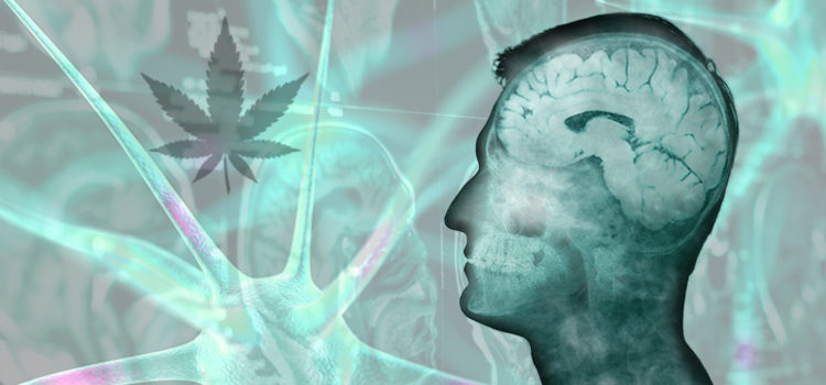 Viele Konsumenten von medizinischem Marihuana hören mit verschreibungspflichtigen Medikamenten auf