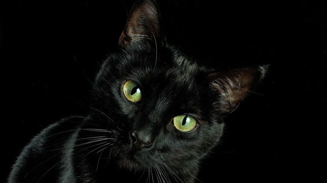Katzen- Sie schützen dich und dein Zuhause vor Gespenster und negativen Geistern!