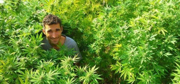 Rick Simpson: Der Hanf ist verboten weil die Pflanze die Arzneimittel-, Chemie- und Erdölindustrie stark gefährdet