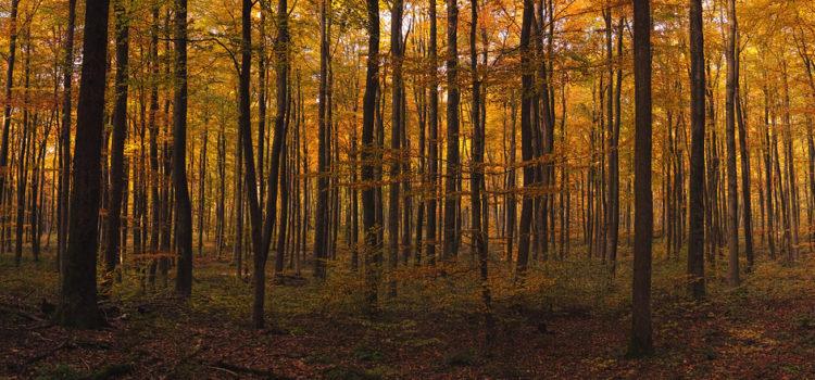 Irland pflanzt 440 Millionen neue Bäume