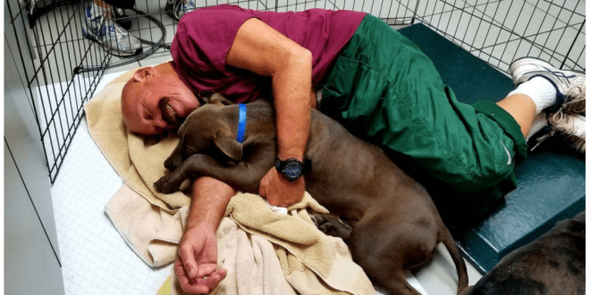 Humane Society sucht nach Freiwilligen, die mit Tierheim-Hunden kuscheln