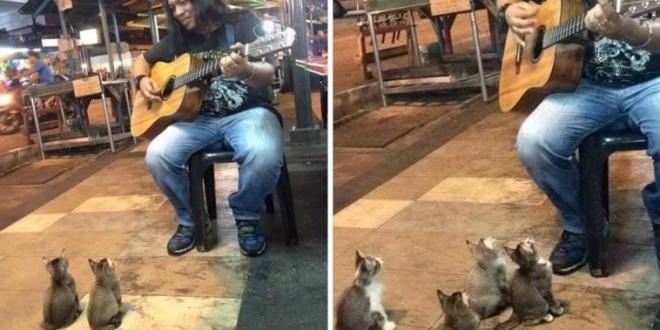 Der Straßensänger wurde die ganze Nacht ignoriert -bis 4 Katzenbabys kamen um ihn zu unterstützen