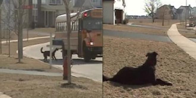 Hund wartet jeden Tag auf seinen Menschen, um ihm aus dem Schulbus zu helfen