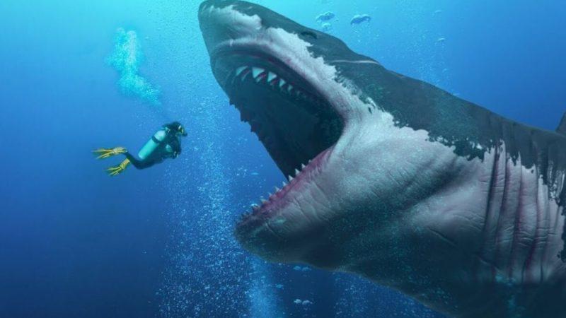 MEGALODON: Der grösste Hai der Welt – Der bis zu 50 Fuss gross wurde – Wurde vom grossen weissen Hai ausgelöscht, so die Studie