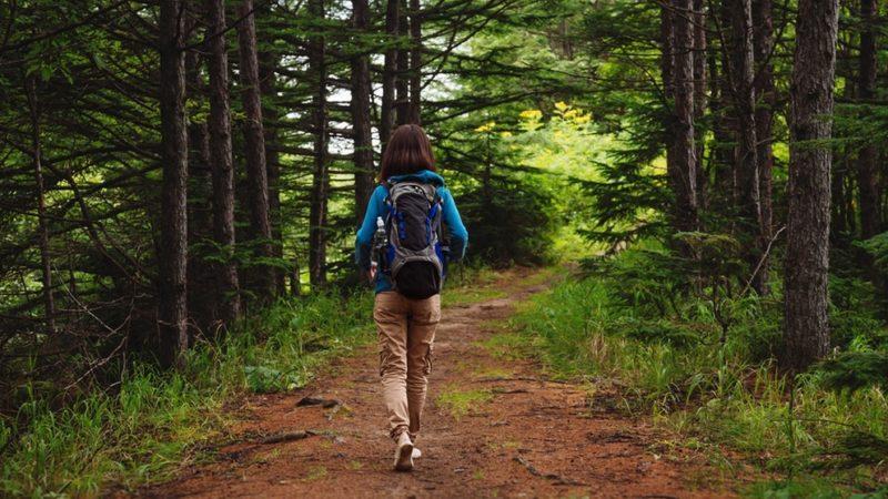 Waldtherapie: Ein zweistündiger Waldspaziergang bringt Körper und Seele in Einklang