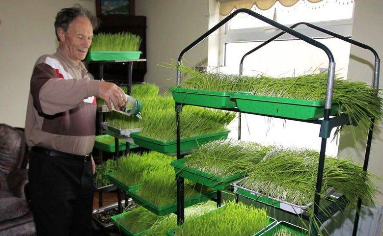 Erstaunliches Ergebnis: Dieser 74-jähriger Krebspatient heilte sich selbst mit Weizengrassaft !