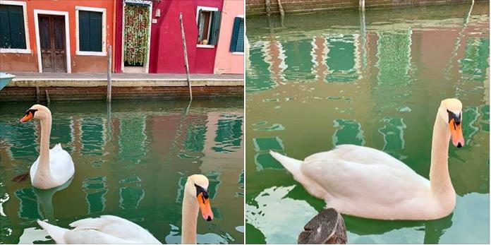 Schwäne und Delfine kehren in Italien zurück, da sich Luft- und Wasserqualität während Quarantäne verbessert