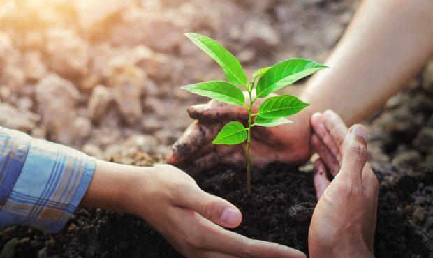 Philippinische Maturanten müssen Bäume pflanzen