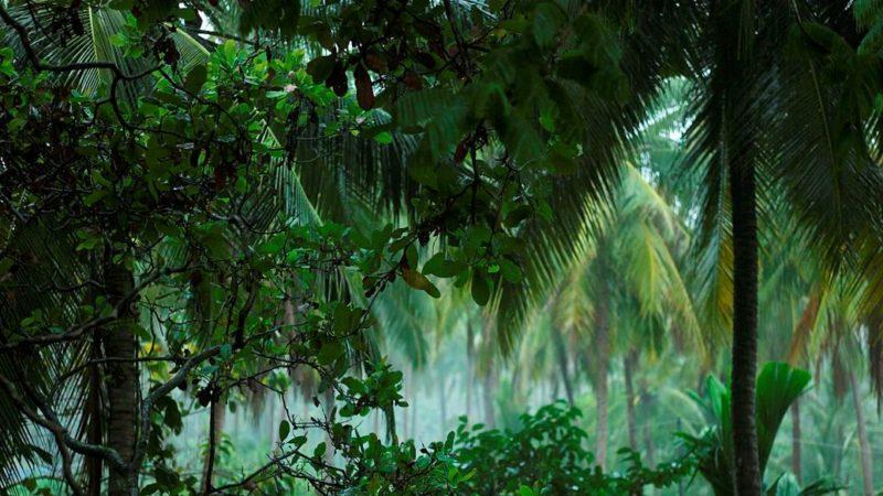 Warum große Vögel für den Erhalt des Regenwalds entscheidend sind