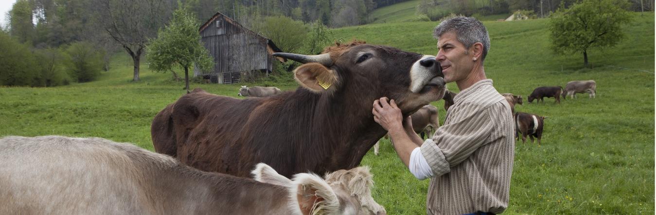 Ein Bauer steigt aus – «Kühe und Kälber rufen nach der Trennung tagelang nacheinander!