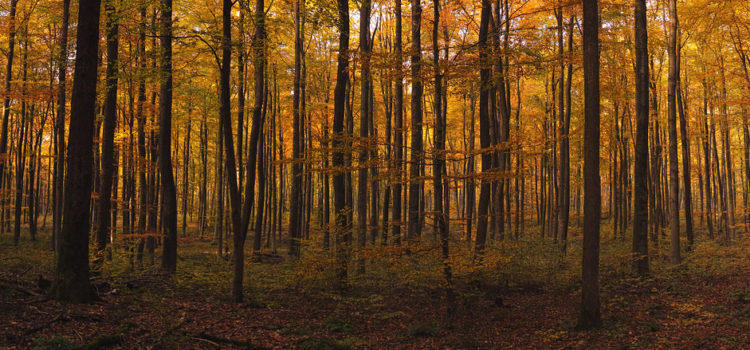 Irland will in den nächsten 20 Jahren 440 Millionen Bäume pflanzen