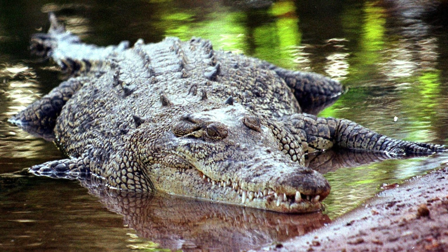 2 Meter langes Monster in deutschem Fluss