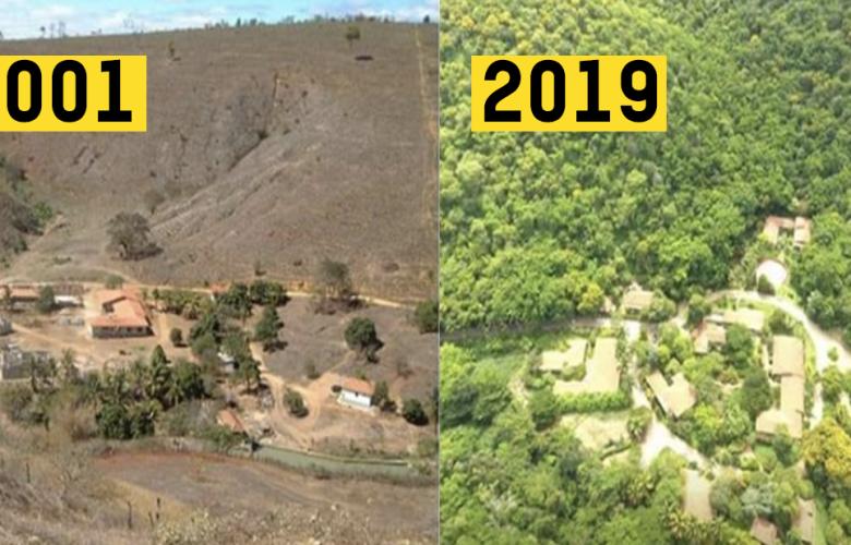 Ein brasilianischer Fotograf stellte einen ganzen Wald wieder her in 20 Jahren mit 2,7 Millionen Bäumen!