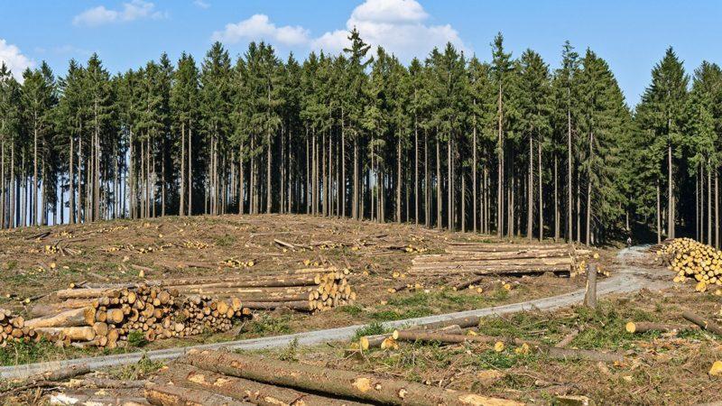 Chinesen kaufen in Deutschland ganze Wälder !!