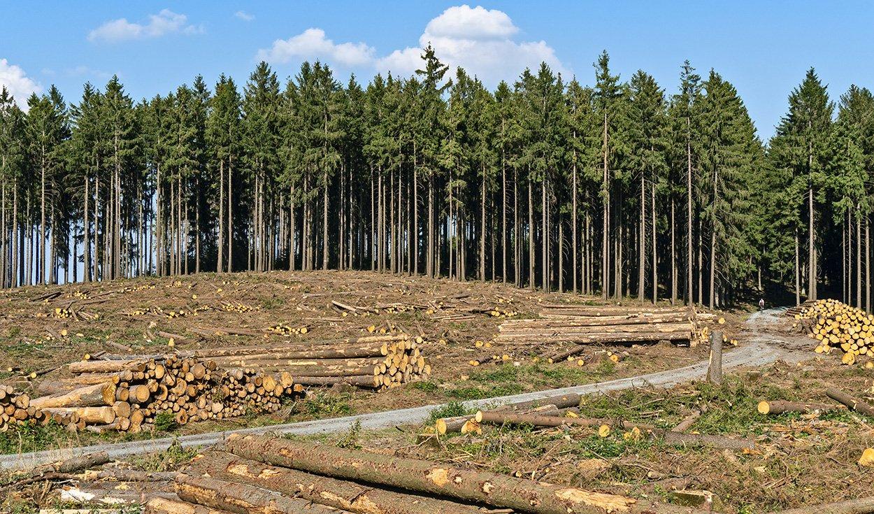 Chinesen kaufen deutsche Wälder