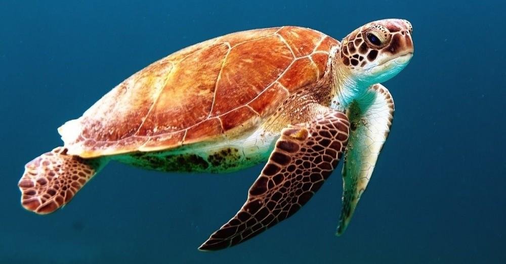 Pflicht zum Schutz der Meere