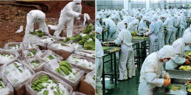 Lebensmittel-Horror: Sie sind von allen guten Geistern verlassen – Lebensmittel aus China, verdorben, gefährlich und hochbelastet auf Ihrem Teller!! (VIDEOS)