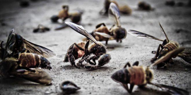 Kalifornien: Passant filmt, wie leblose Bienen zwischen zwei 5G-Antennen auf den Boden klatschen !!